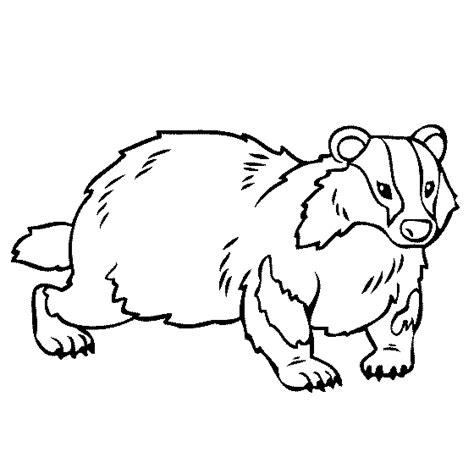badger coloring page projects to try pinterest craft