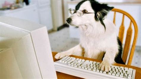 Dog On Computer Meme - dog computer blank template imgflip