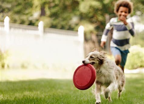 imagenes de niños jugando con un perro 10 juguetes para que los ni 241 os jueguen con los perros