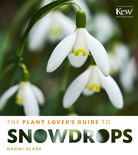 plant lovers save 19 the plant lover s guide to snowdrops the