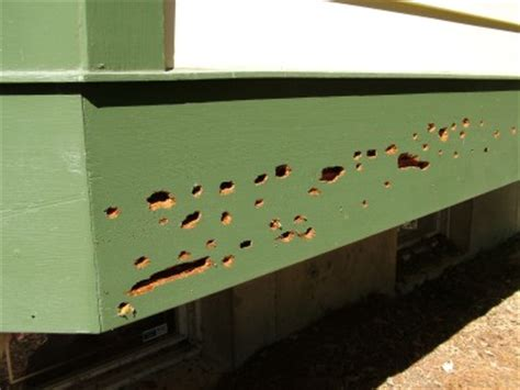 bees nest in siding of house woodpecker damage ask the builderask the builder