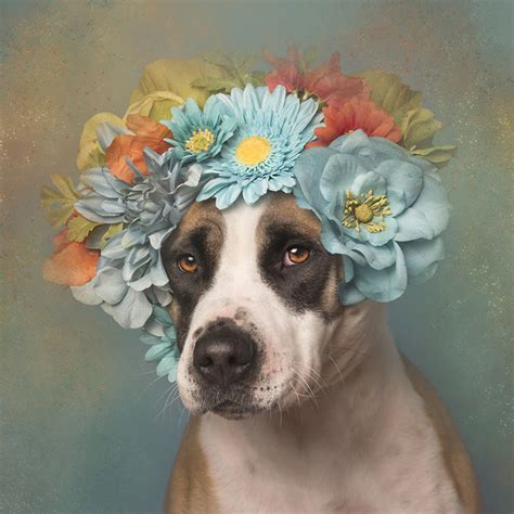 designboom dogs adoptable pit bulls show a softer side for sophie gamand s