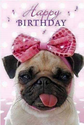 happy birthday pug images 25 best ideas about happy birthday pug on birthday greetings