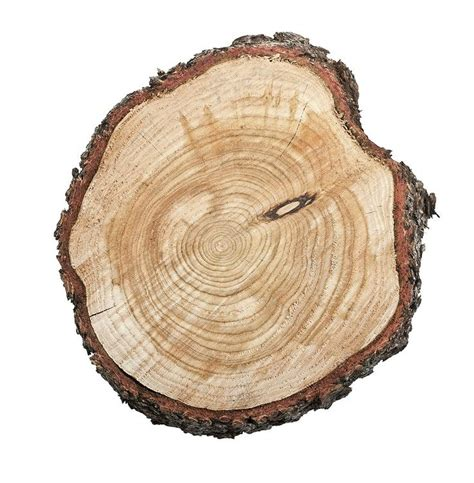 tree ring tree growth rings inspired by nature