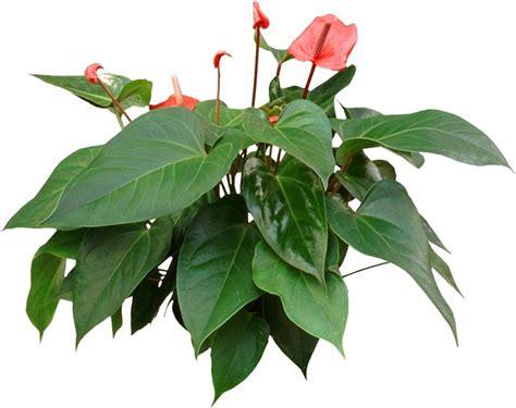 best office plants pin by houseplant 411 on best office plants pinterest