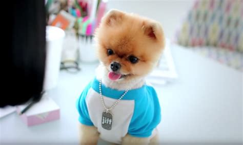 what of is jiffpom what of is jiffpom the best 2018