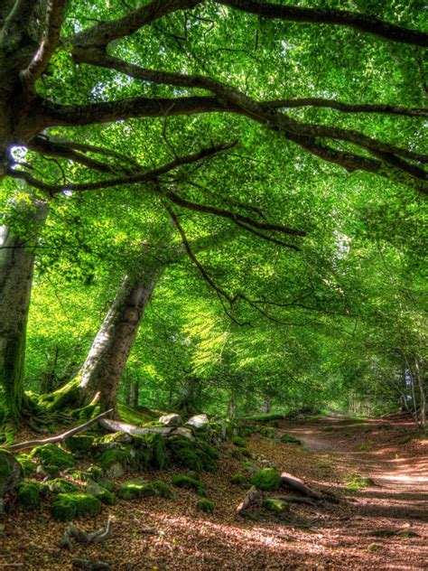 green forest path ipad mini wallpaper
