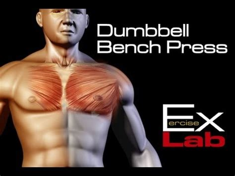 dumbbell bench press chest exercises