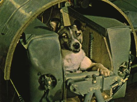 soviet space dogs laika space history by zim