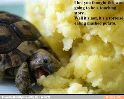 Mashed Potatoes Meme - turtle eating mashed potatoes 3 turtles c