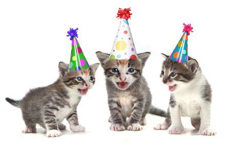 free printable cat themed birthday invitations drevio
