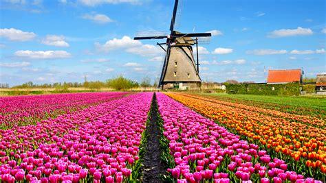 fiori dall olanda olanda in fiore losaiche