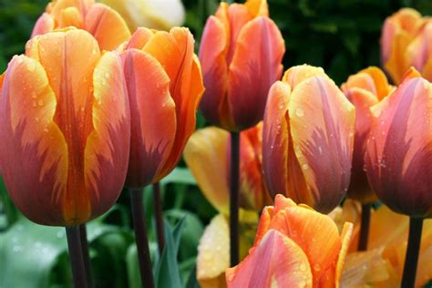 fall blooming bulbs hgtv 11 spring blooming bulbs hgtv