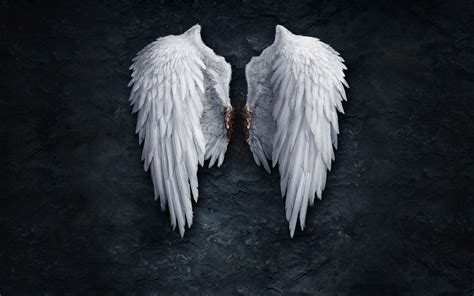 angel wings wallpapers  images  wallpapers