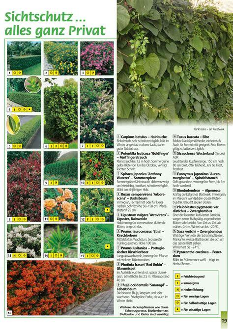 Garten Hecken Pflanzen by Heckenpflanzen
