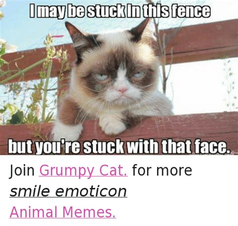 grumpy cat joins cats on 25 best memes about animals cats grumpy cat and memes