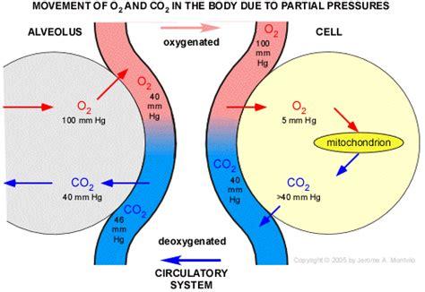 pressure in alveoli gas exchange bing images biol 335 respiratory mechanics montvilo