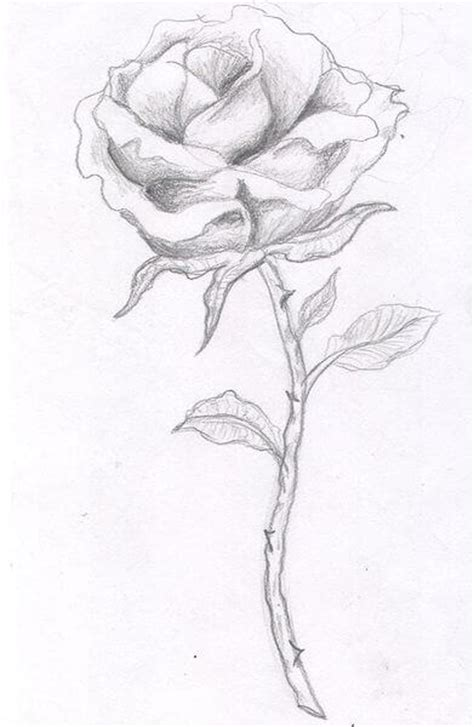 long stem rose tattoo designs designs the is a canvas