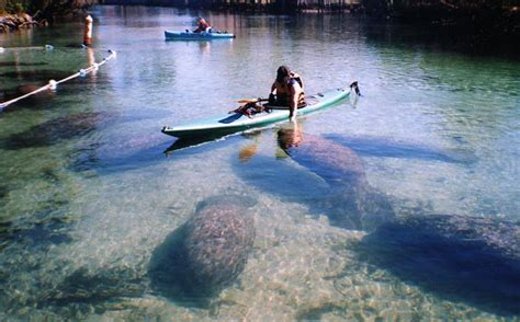 fishing boat rentals crystal river fl swim with manatees in crystal river florida manatee tours