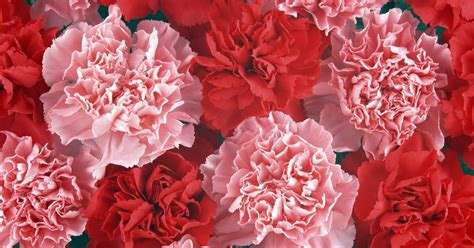 most beautiful flowers around the world most beautiful flowers around the world