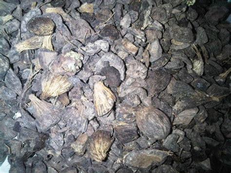 Minyak Tempurung Kelapa berita sawit limbah tempurung sawit untuk minyak nilam
