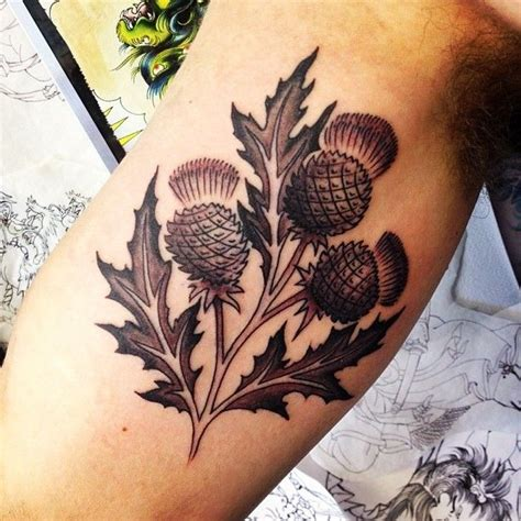 thistle tattoos designs best 25 scottish thistle ideas on