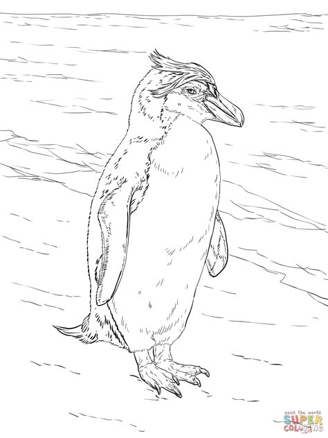 royal penguin coloring page realistic royal penguin coloring page free printable