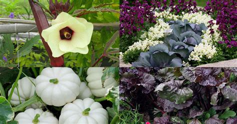 Gardenia Needs 18 Most Colorful Vegetables You Need To Grow In Your
