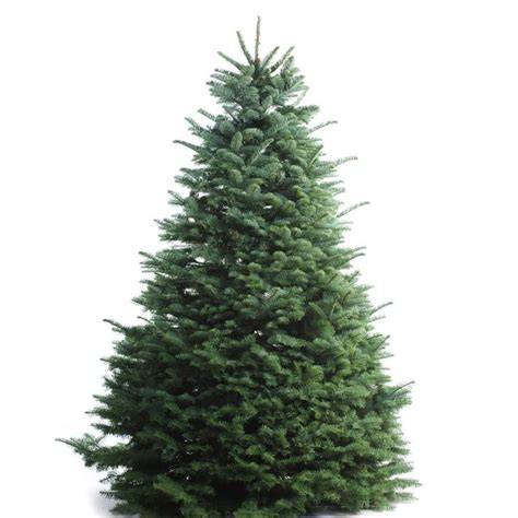 lowes real christmas tree shop 5 6 ft noble fir real tree at lowes