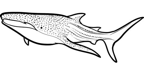 can sharks see color unique whale shark page to color gallery printable