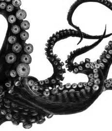octopus tierra connor