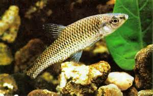 Avenger blog: freshwater fish pictures