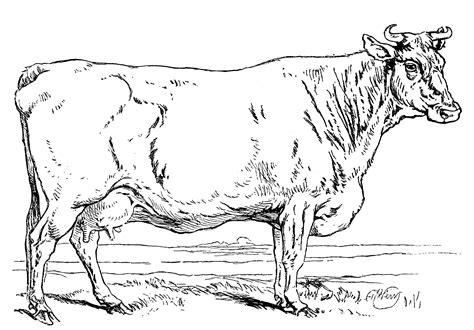 realistic cow coloring page dairy cow coloring pages realistic coloring pages