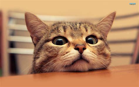 cat wallpaper note 3 pretty wallpaper 귀여운 고양이 배경 바탕 화면 웰페이퍼 모음 kitten cat