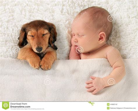 puppy sleeping with baby newborn baby and a dachshund puppy sleeping together litle pups
