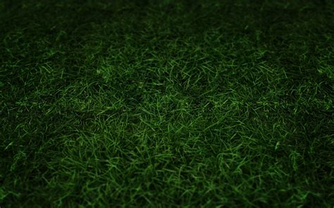 green grass wallpaper green grass wallpaper 1034456