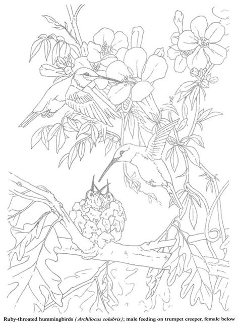 coloring pages for adults hummingbird coloring for adults kleuren voor volwassenen coloring