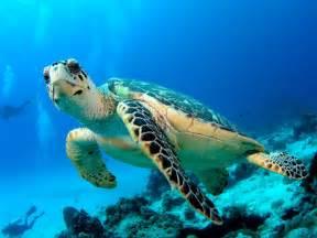 melina beach turtle hatchery