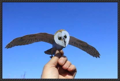 Owl Papercraftsquare Free Papercraft - animal paper model barn owl free template