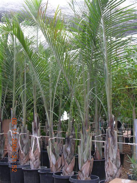 tropical plant rentals tropical plants