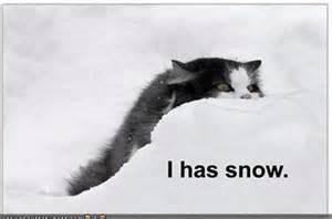 Funny Snow Meme - snow day cat meme
