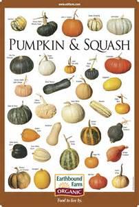interesting new ways to prepare winter squash and pumpkins - Pumpkin Names