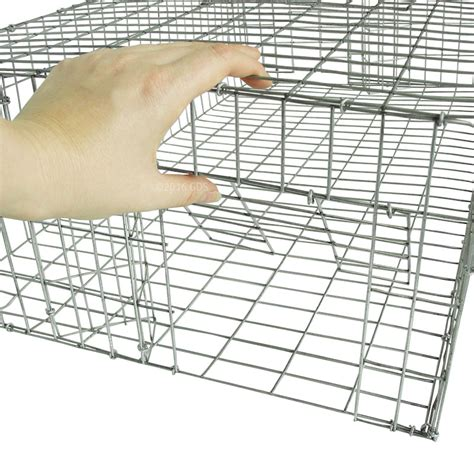 Pigeon Trap Door Design by Pigeon Trap 35 In X 16 In Pt3516 By Sw Cage 52 95