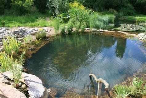 natural pool natural pools or swimming ponds insteading