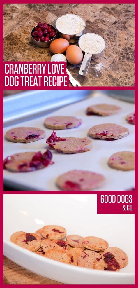 are cranberries for dogs cranberries are a seasonal treat for pups we this cranberry treat recipe