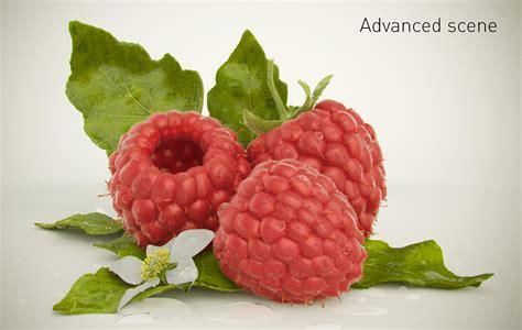3d Raspberry raspberry 3d model obj fbx c4d cgtrader