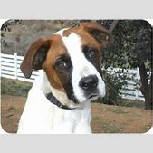 Yardley | Adopt...