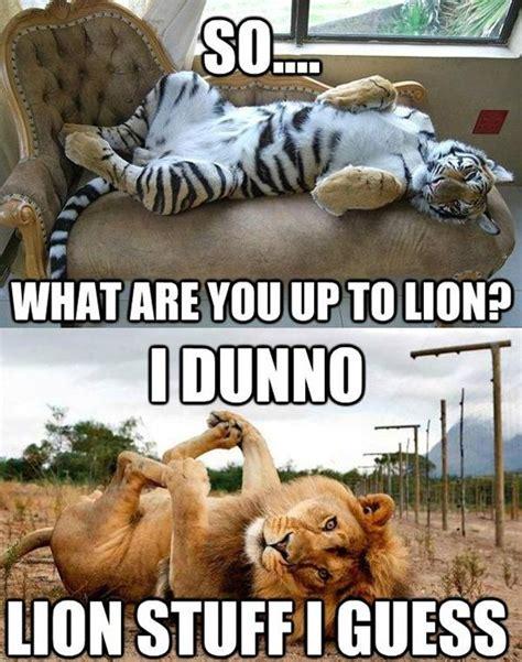 Lion Meme - 30 funny animal captions part 7 30 pics amazing creatures