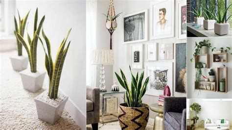plant home decor 6 creative ways to include indoor plants into your home d 233 cor