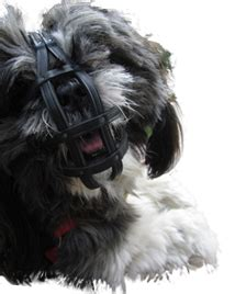 shih tzu muzzle unique ecologic leather muzzles for all breeds of dogs order